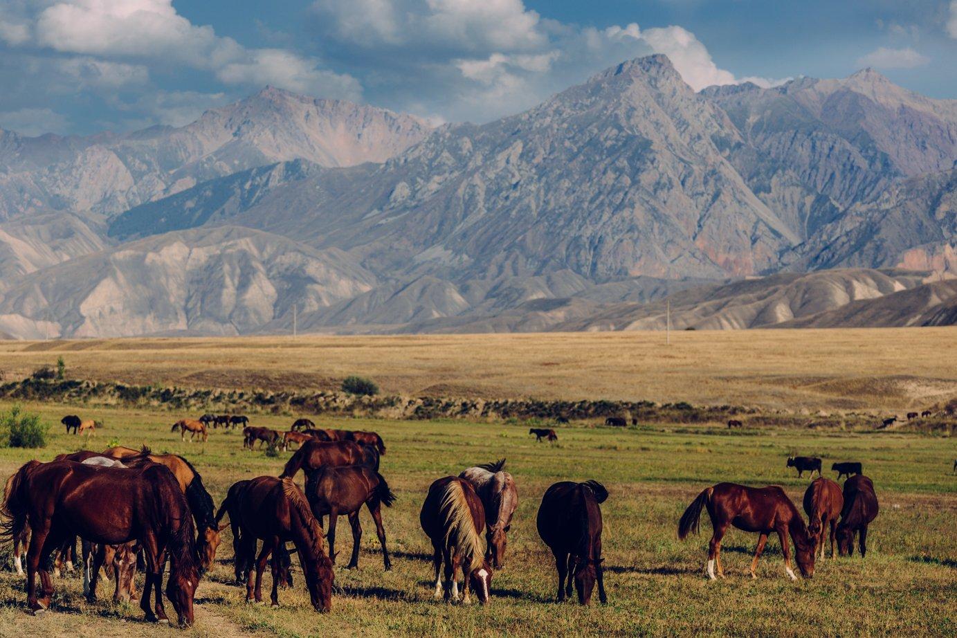 Konie, wszędzie konie.